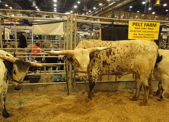 Photos: Highlights of the 2015 Houston Livestock Show and Rodeo